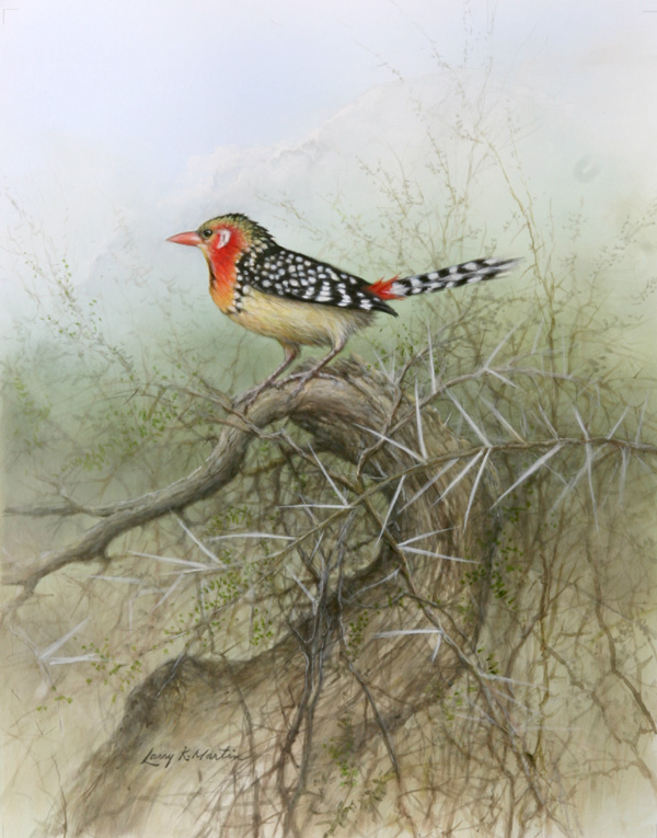"""Red and Yellow Barbet"" by American wildlife artist Larry K. Martin"