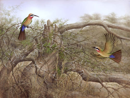 whitefronted beeeaters by American wildlife artist Larry K. Martin