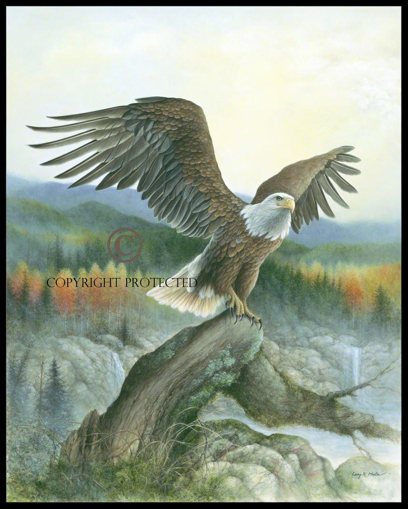 """Time To Soar...Again"" Bald Eagle"