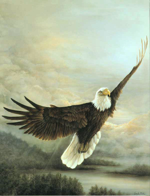 """Time to Soar"" Bald Eagle"