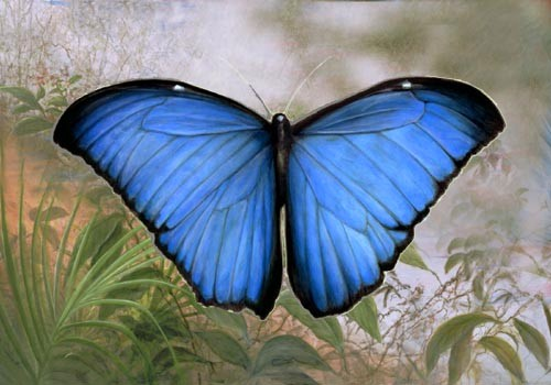 """Blue Morpho"" by American wildlife artist Larry K. Martin"